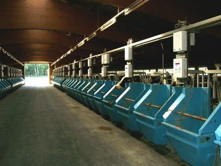 Photo: Measurement of the individual feed intake of dairy cows with computer controlled troughs (FLI Braunschweig)