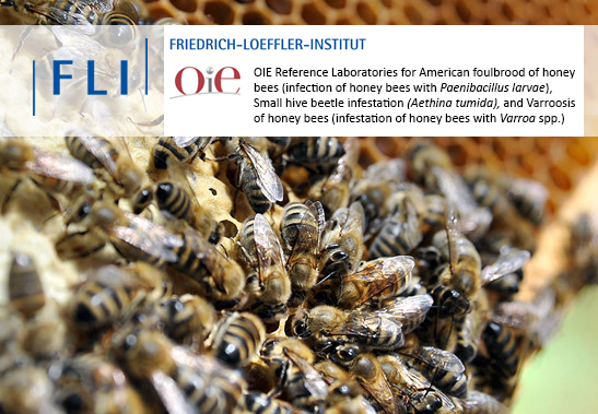 Bild: OIE Reference Laboratories for American foulbrood of honey bees (infection of honey bees with Paenibacillus larvae), Small hive beetle infestation (Aethina tumida), and Varroosis of honey bees (infestation of honey bees with Varroa spp.)