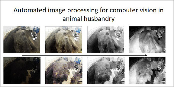 Automated image processing for computer vision in animal husbandry (Graphic © FLI)